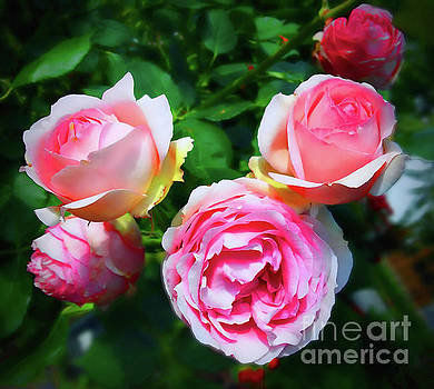 Dreamy Roses by Jasna Dragun