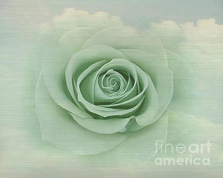 Dreamy Vintage Floating Rose by Judy Palkimas