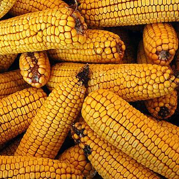 LeeAnn McLaneGoetz McLaneGoetzStudioLLCcom - Dried Corn cobs