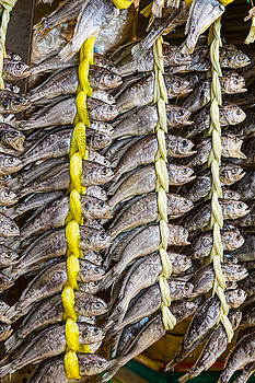 Dried Fish by James BO Insogna