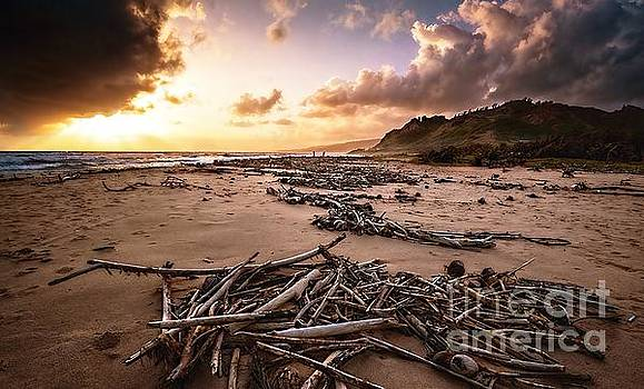 Drift Wood Beach by Hugh Walker