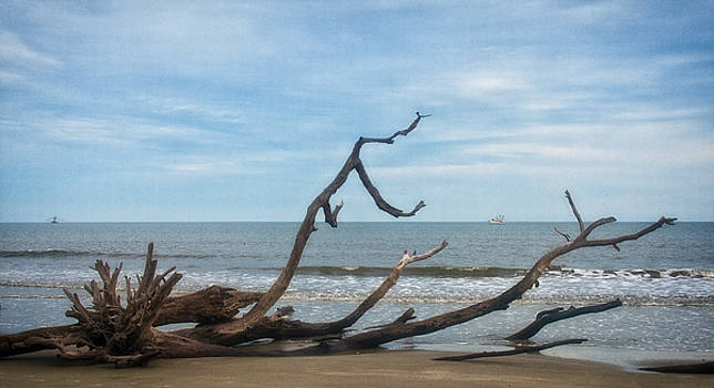 Driftwood and Shrimpboat by Sandy Schepis
