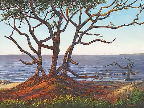 Driftwood Beach II, Jekyll Island, GA by Elaine Farmer