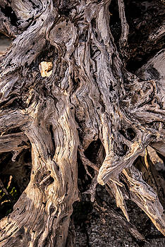 Driftwood Close-Up by Steven Ainsworth