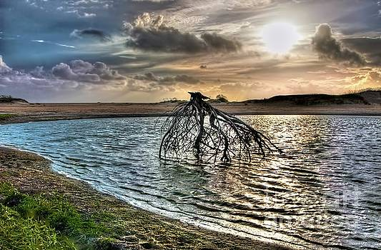 Dan Carmichael - Driftwood in a Tide Pool Outer Banks