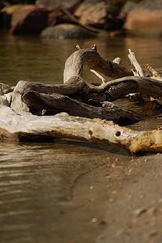 Driftwood by Ramona Whiteaker