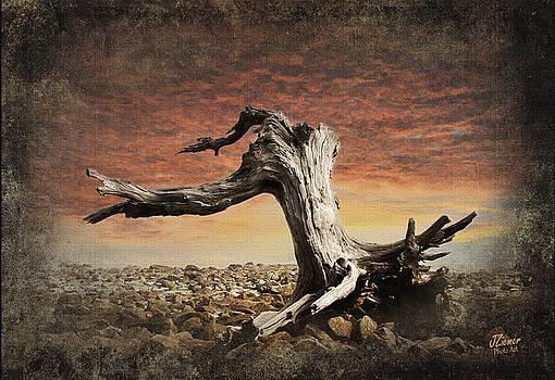 Driftwood Stump by Jim Ziemer
