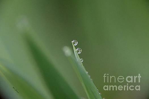 Droplets by Yumi Johnson