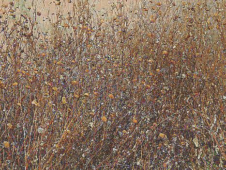 Lynda Lehmann - Drought Seared But Beautiful