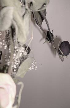 Dryed Roses of Loves Left Behind by Samantha  Gilbert