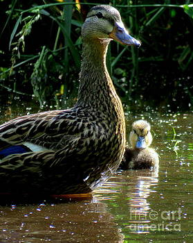 Duck and Duckling by Selma Glunn