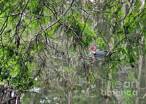 Duck Between The Branches by Lydia Holly