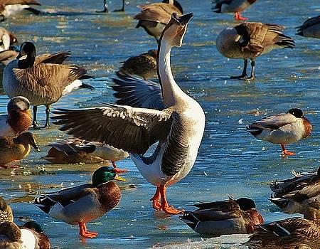 Joy Bradley - Duck Duck Goose