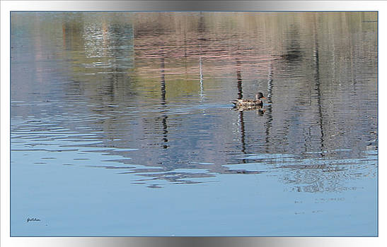 Duck Reflection on Shimmering Waters by Gretchen Wrede