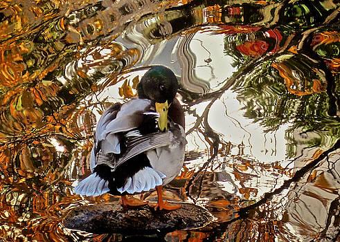 Duck Tale by Richard Cummings