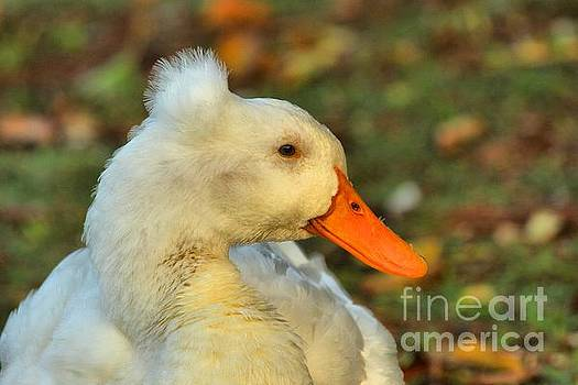 Adam Jewell - Duck With A Mohawk