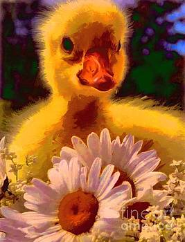 Fuzzy Duckling And Daisies by Catherine Lott