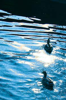 Ducks At Twilight by Ginny Gaura