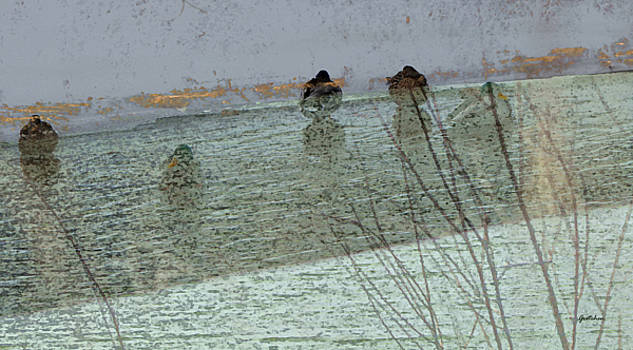 Ducks Fade in to Sea Foam Green by Gretchen Wrede