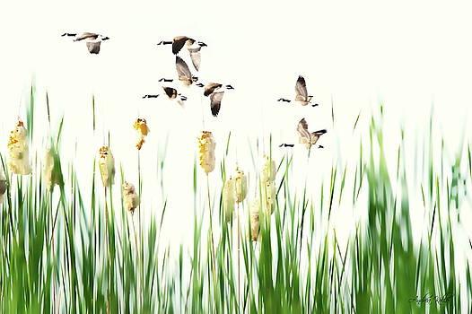 Andrea Kollo - Ducks in Flight - Migration