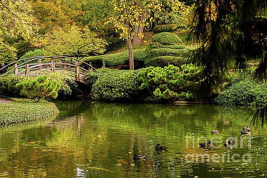 Ducks in Summertime by Iris Greenwell