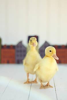 Ducks in the Neighborhood by Amy Tyler
