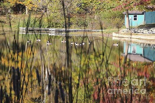 Ducks on the Lake by Don Kenworthy