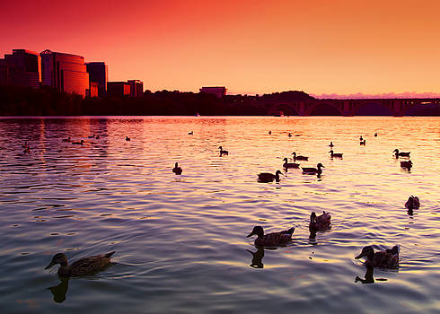 Ducky Sunset by Daphne Sampson