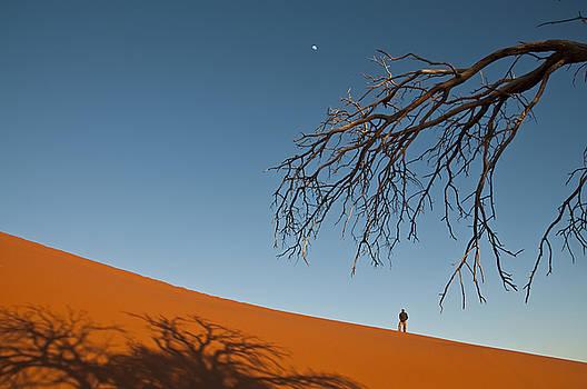 Dune 45 by Olwen Evans