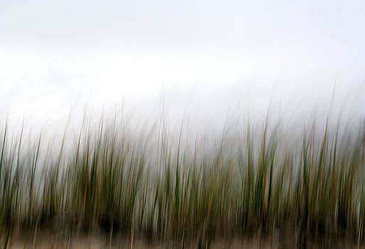 Dune Grass by Doug Hockman Photography
