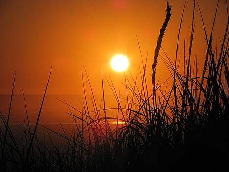 Dune  Grass Sunset III by Gregory Smith