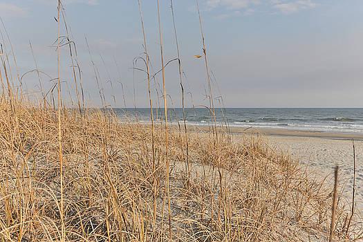 Dune by Jimmy McDonald