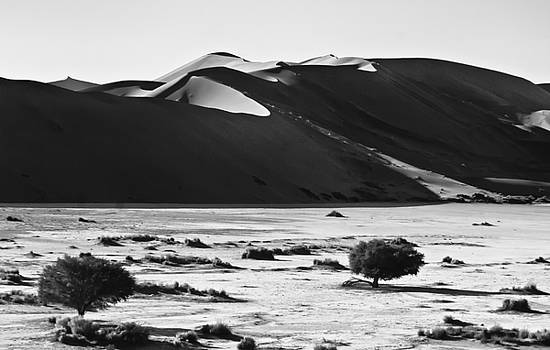 Dunes in Black and White by Sandy Schepis