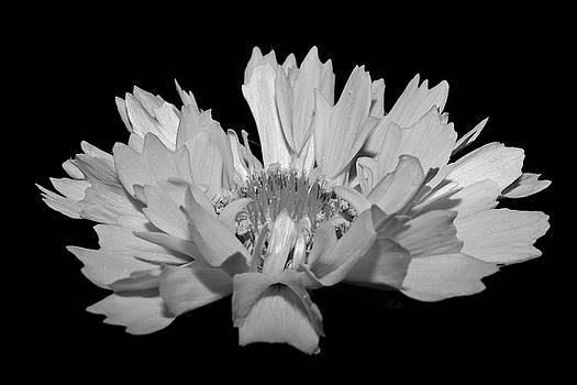 Dusk.... by Tammy Schneider