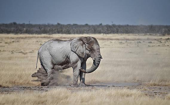 Dust Bath by Sandy Schepis