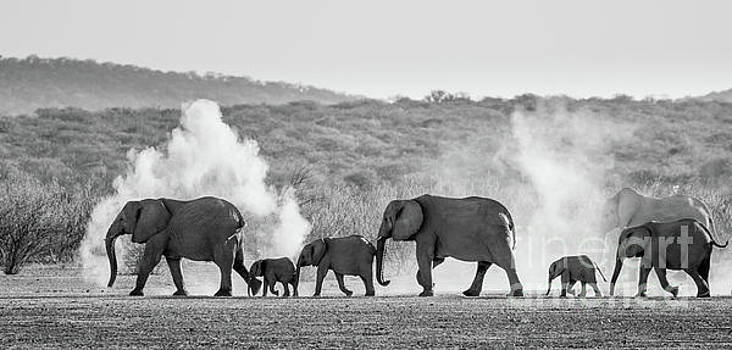 Dusty March by Inge Johnsson