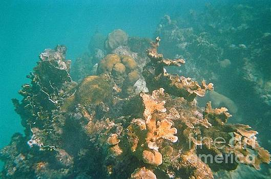 John Malone - Dying Coral