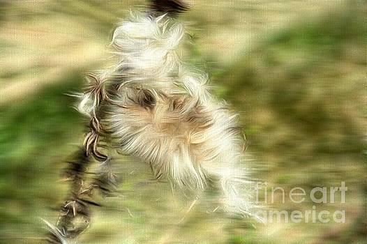 Dying Thistle  by Brenda Bostic