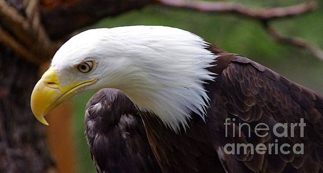 Eagle Eye by Deniece Platt