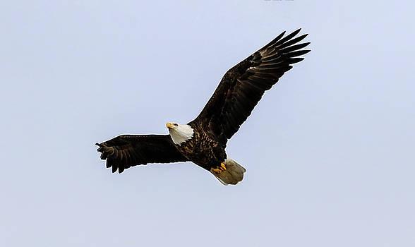 Eagle Eye by Ray Congrove