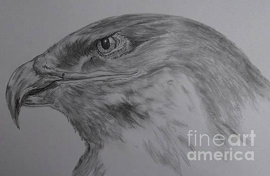 Eagle Eyed. by Cynthia Adams