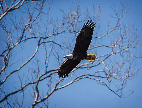Eagle Flying High by Shirley Tinkham