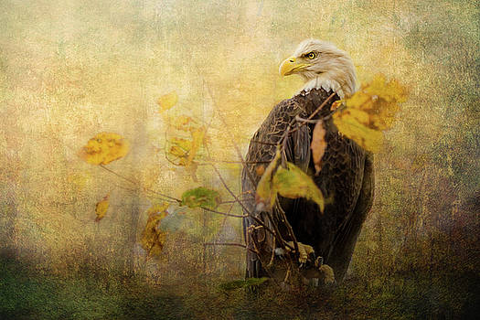 Eagle in Autumn Leaves by Victoria Winningham