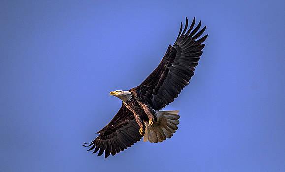Eagle Landing by Ray Congrove