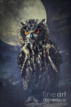 Angela Doelling AD DESIGN Photo and PhotoArt - eagle owl