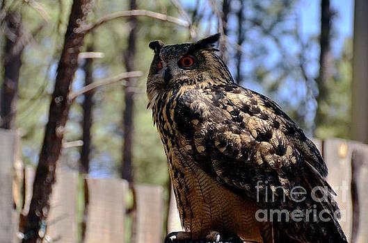 Eagle Owl by Debby Pueschel