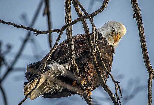 Eagle Power by Ray Congrove