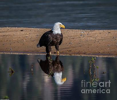 Eagle Reflection  by Mitch Shindelbower