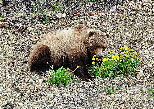 Eagle River Grizzly by Diane E Berry