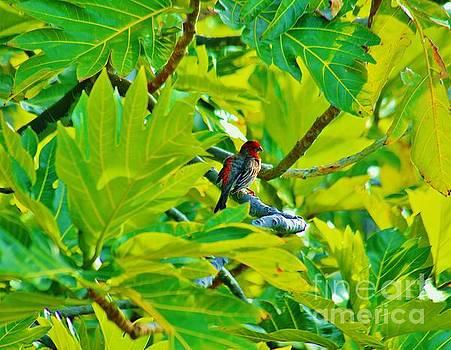 Early Bird by Craig Wood